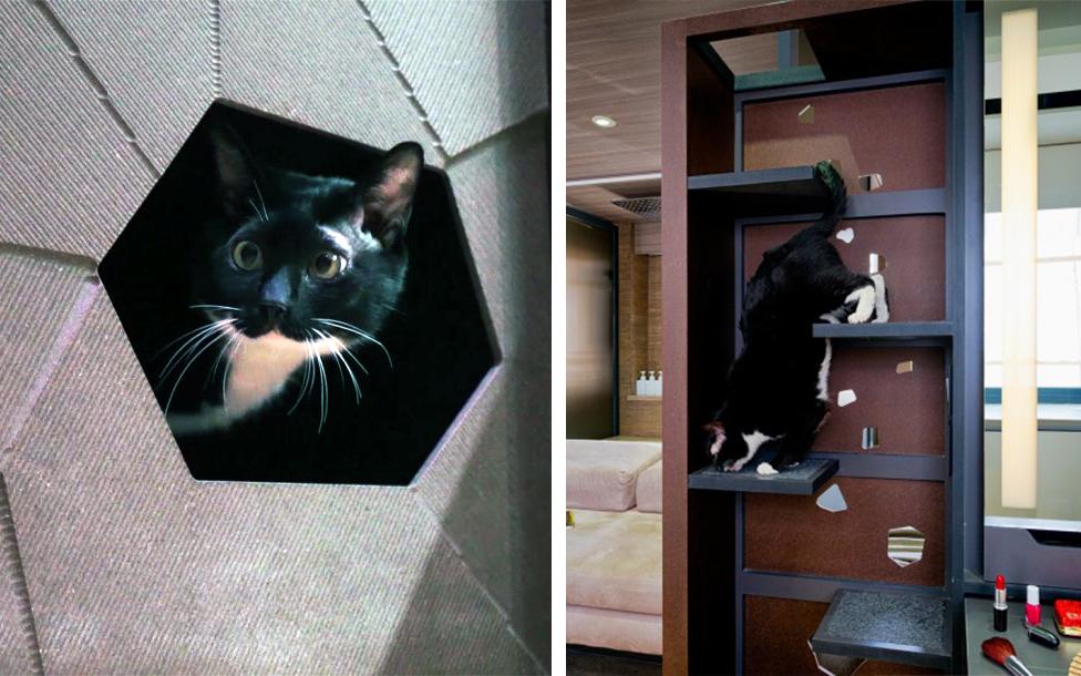 Arredare un mini appartamento a misura di gatto