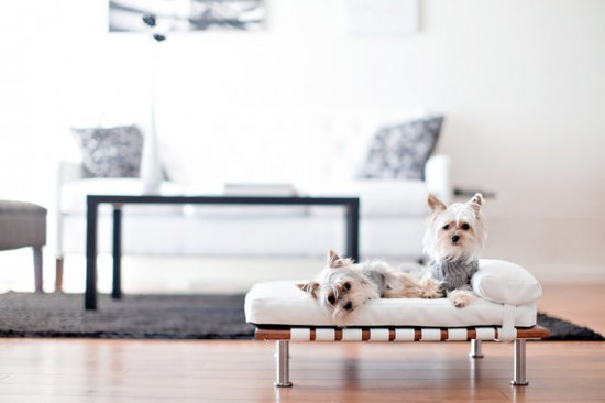 Ispirazioni di stile | Arredare in bianco per cani e gatti
