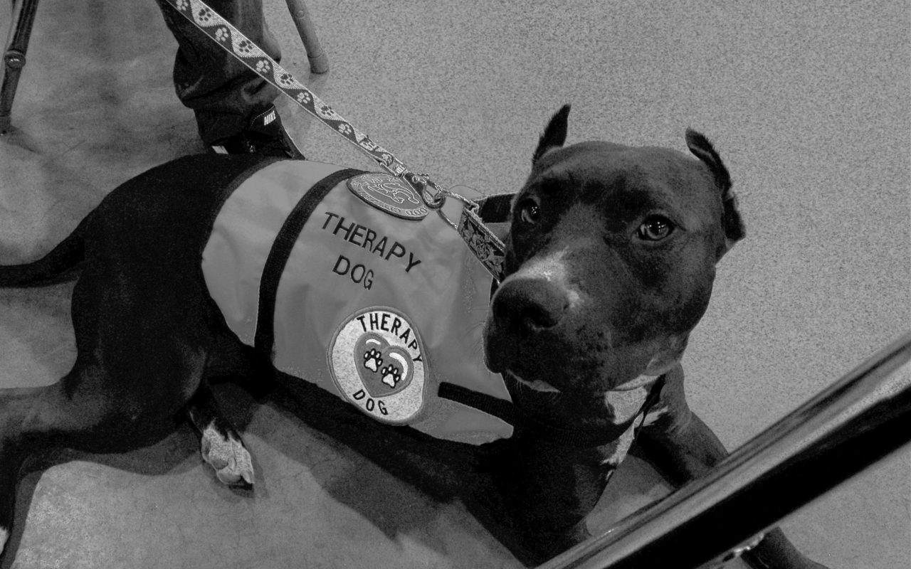 Cani adatti alla pet therapy: le razze più indicate
