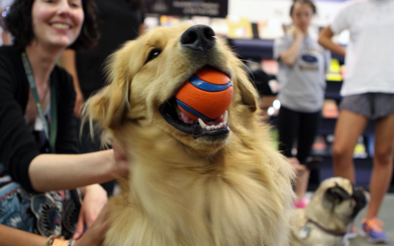Cani adatti alla pet therapy animali pucciosi 4 for Animali pucciosi