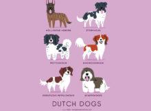 Le razze di cani del mondo sulle illustrazioni di Lili Chin