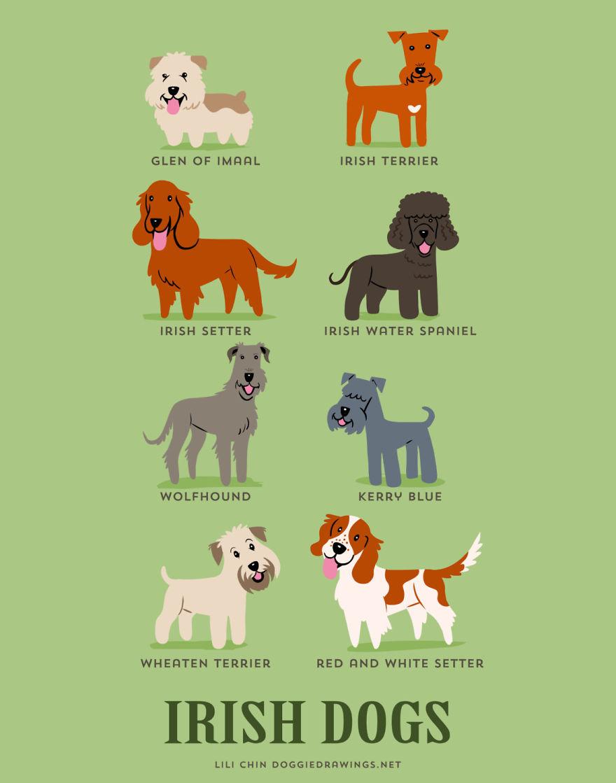 Le razze di cani del mondo sulle illustrazioni di Lili ChinLe razze di cani del mondo sulle illustrazioni di Lili Chin