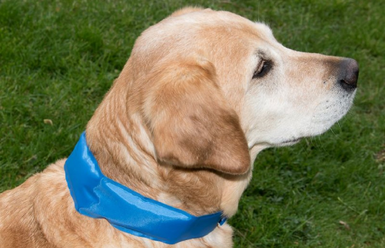 Rinfrescare il cane animali pucciosi 4 animali pucciosi for Animali pucciosi