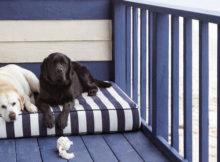 Ispirazioni di pet design | Stile marinaro per cani e gatti