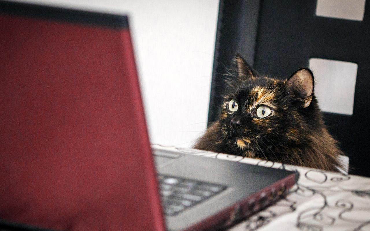 Guida all'acquisto online di prodotti per animali