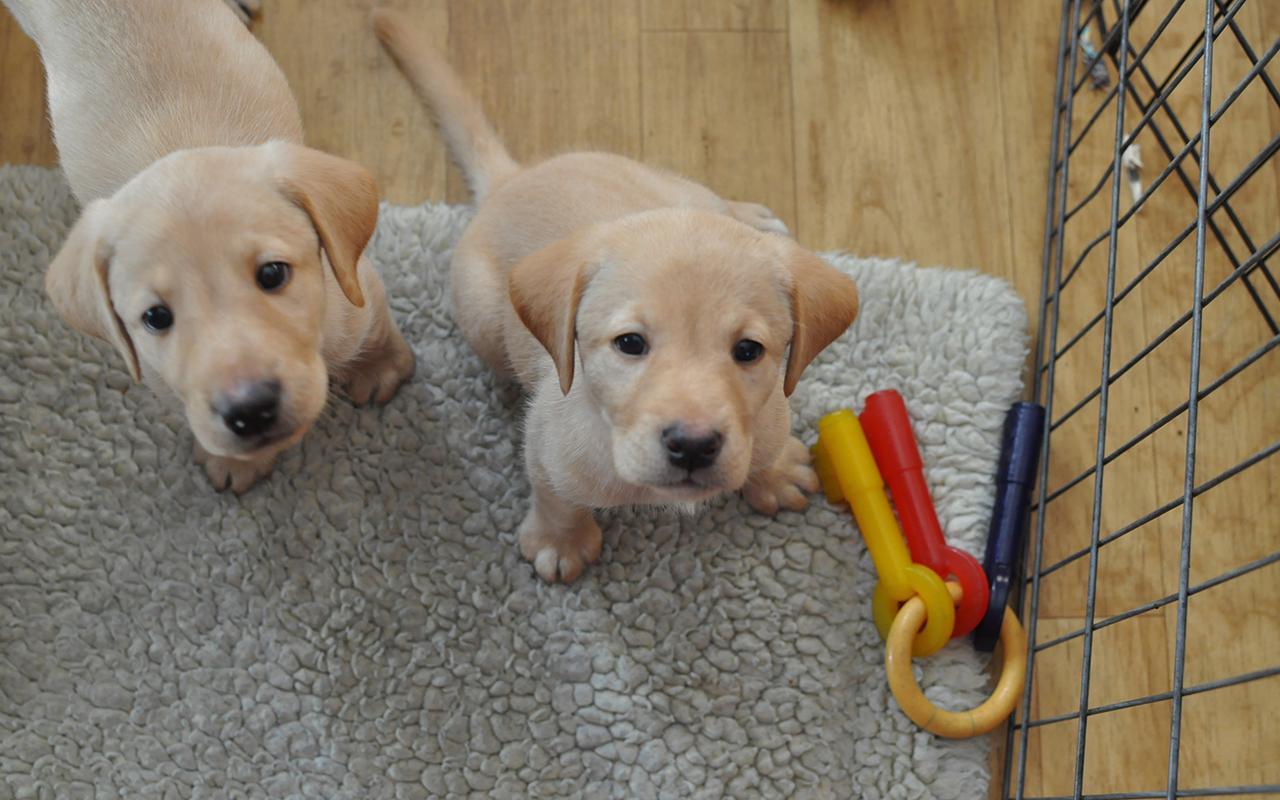 Cose indispensabili per un cucciolo di cane in casa for Casa progetta il trotto del cane