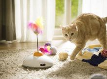 Giochi automatici per gatti per farli svagare in nostra assenza