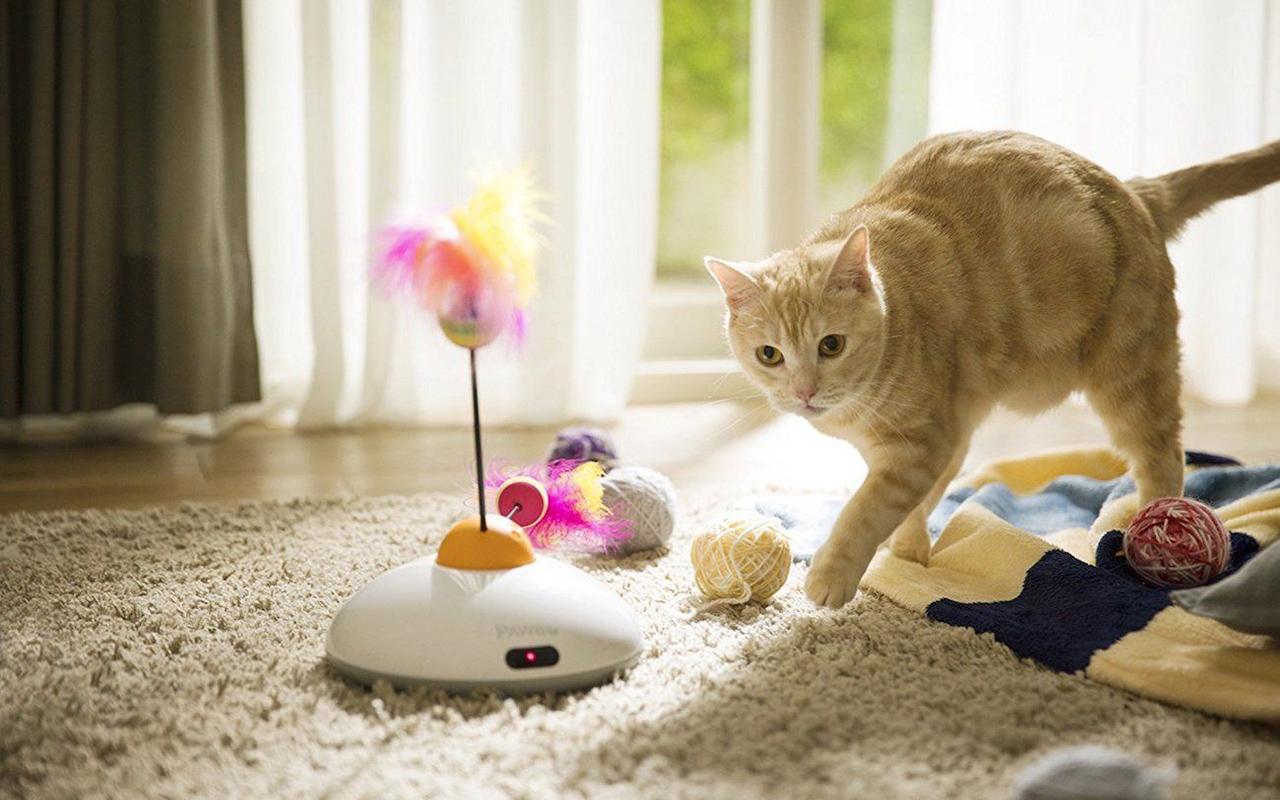 Giochi automatici per gatti per farli svagare in nostra for Arredamento per gatti