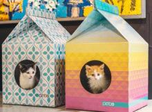 Cucce in cartone per gatti