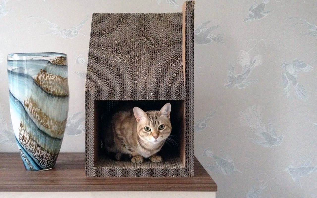 Cucce in cartone per gatti animali pucciosi 6 animali for Animali pucciosi