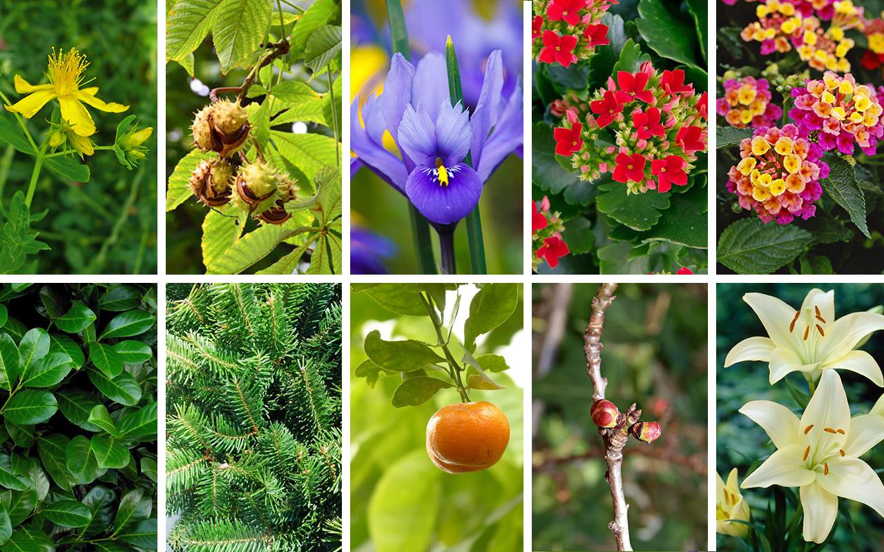100 piante pericolose per conigli: conosciamole!