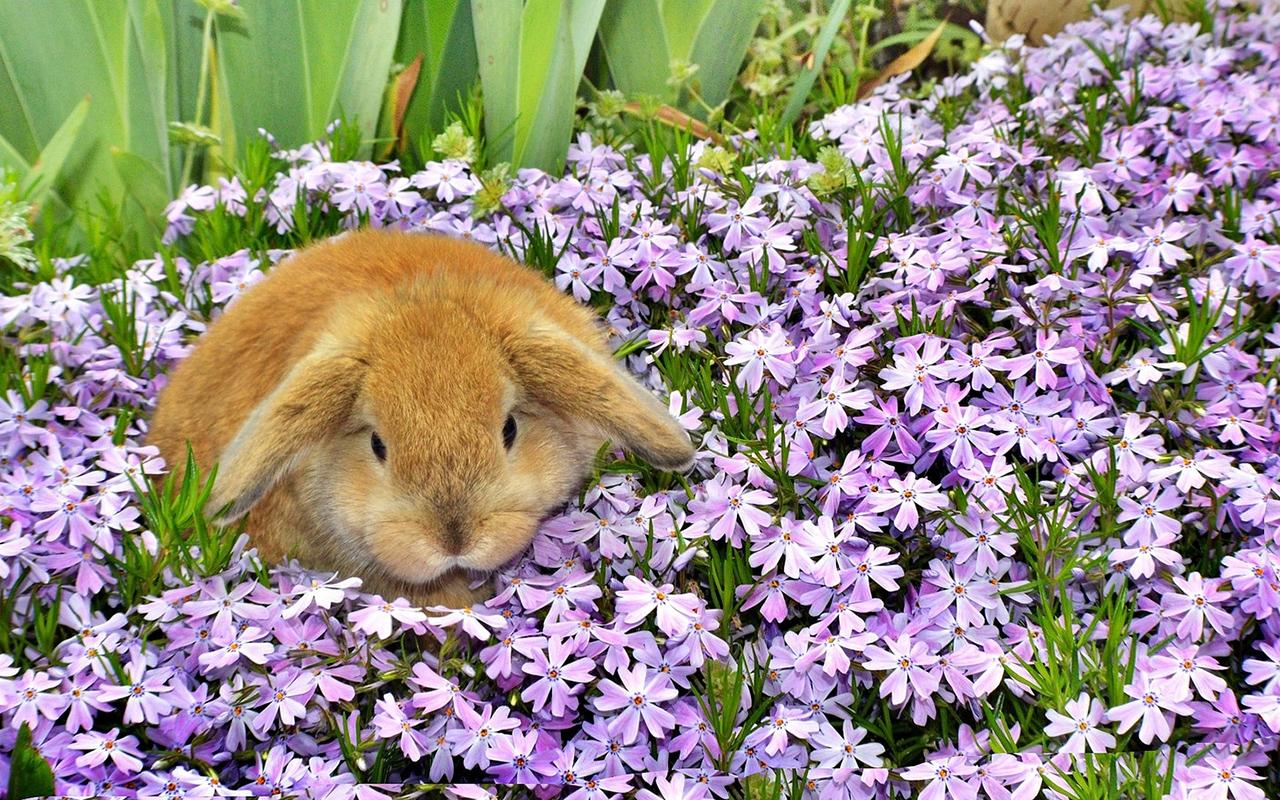 Fiori E Piante Commestibili 100 piante pericolose per conigli: conosciamole! - animali
