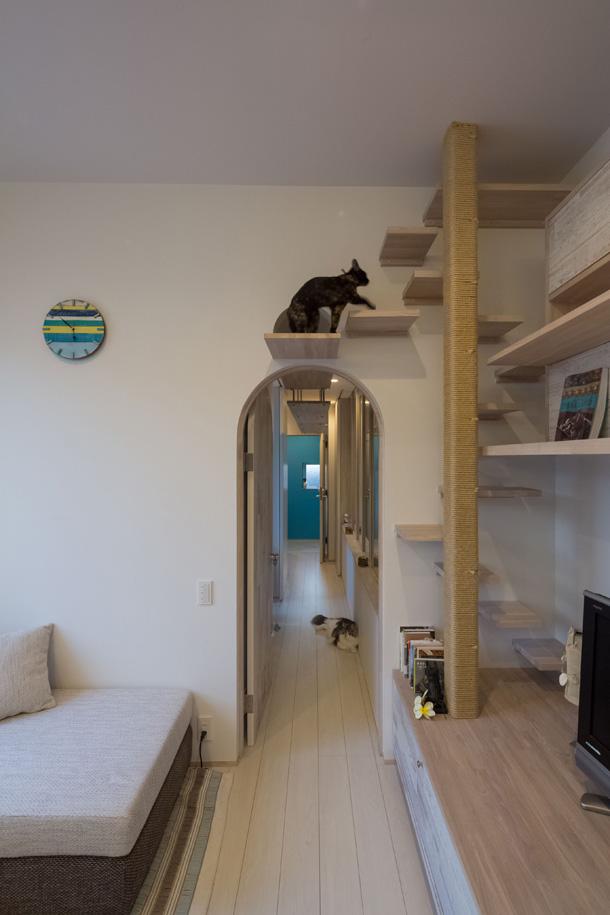 Il progetto di una villa moderna a misura di gatto