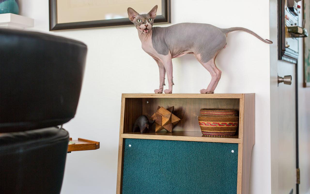 Una casa in stile Art Dèco a misura di umani, cani e gatti
