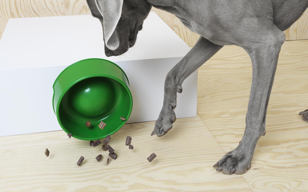 Ikea catalogo collezione cani gatti lurvig pet design for Tiragraffi per gatti ikea