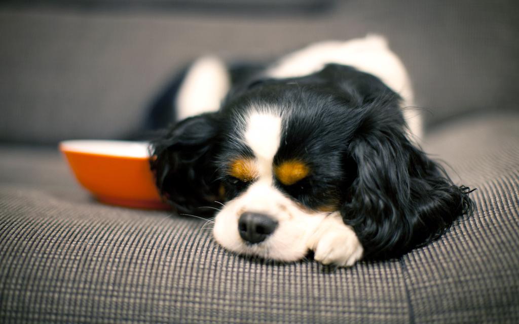 Pulire una casa con animali istruzioni per l 39 uso - Pulizia tappeti ammoniaca ...