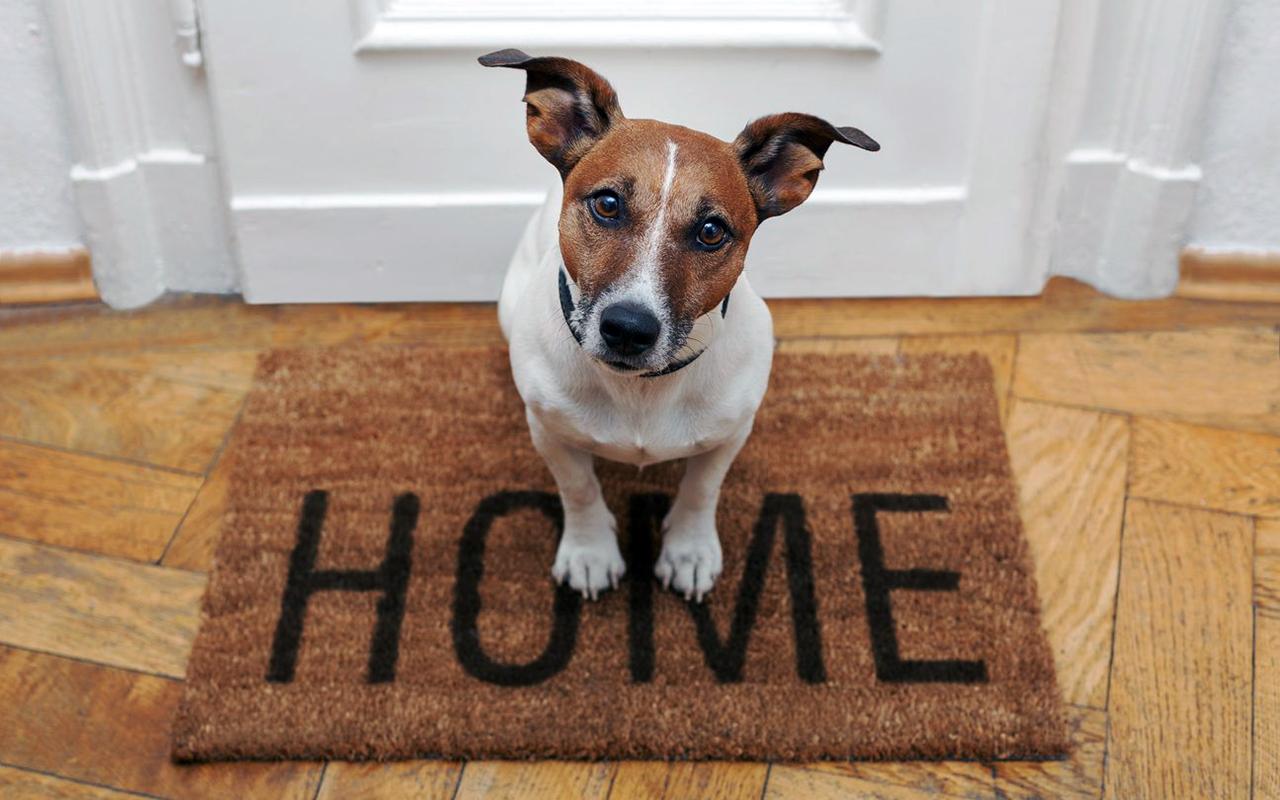 Pulire una casa con animali, istruzioni per l'uso