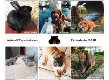 Il calendario 2018 degli animali gratis per voi!
