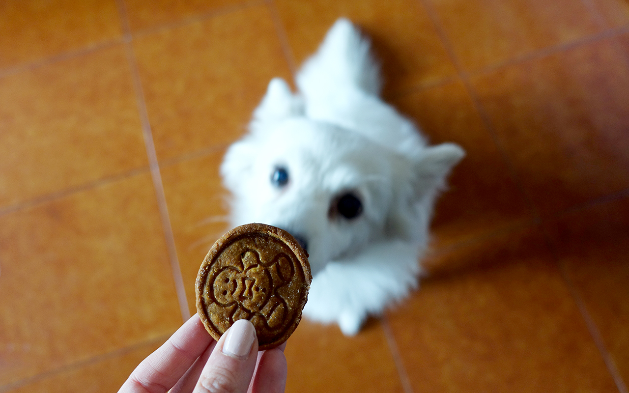 Biscotti per cani fatti in casa. A natale un premio anche per loro!