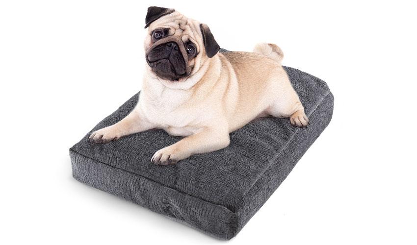 Cucce invernali per cani l 39 inverno sta arrivando - Tappetino riscaldante per cani ...