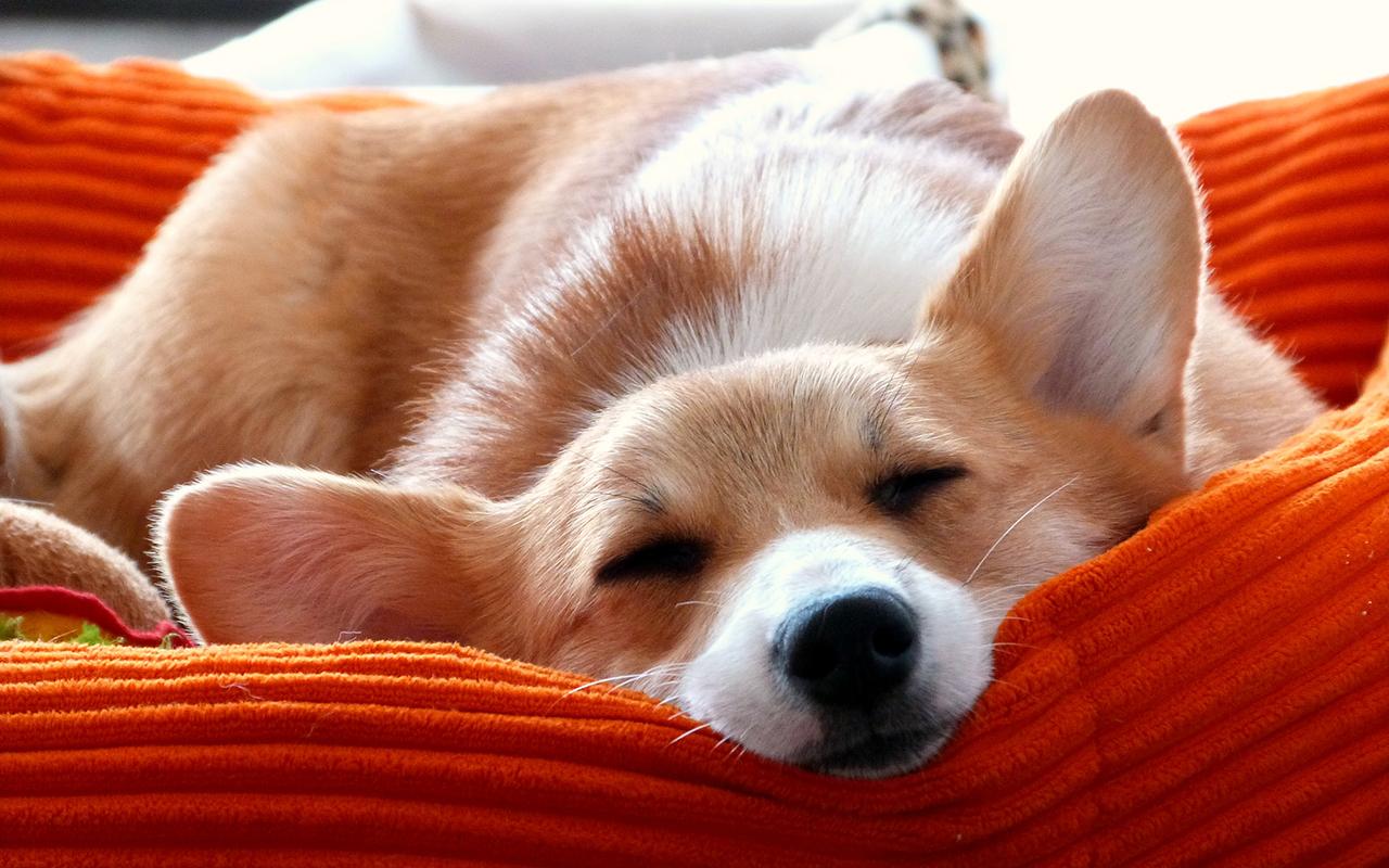 Cucce invernali per cani l 39 inverno sta arrivando for Animali pucciosi