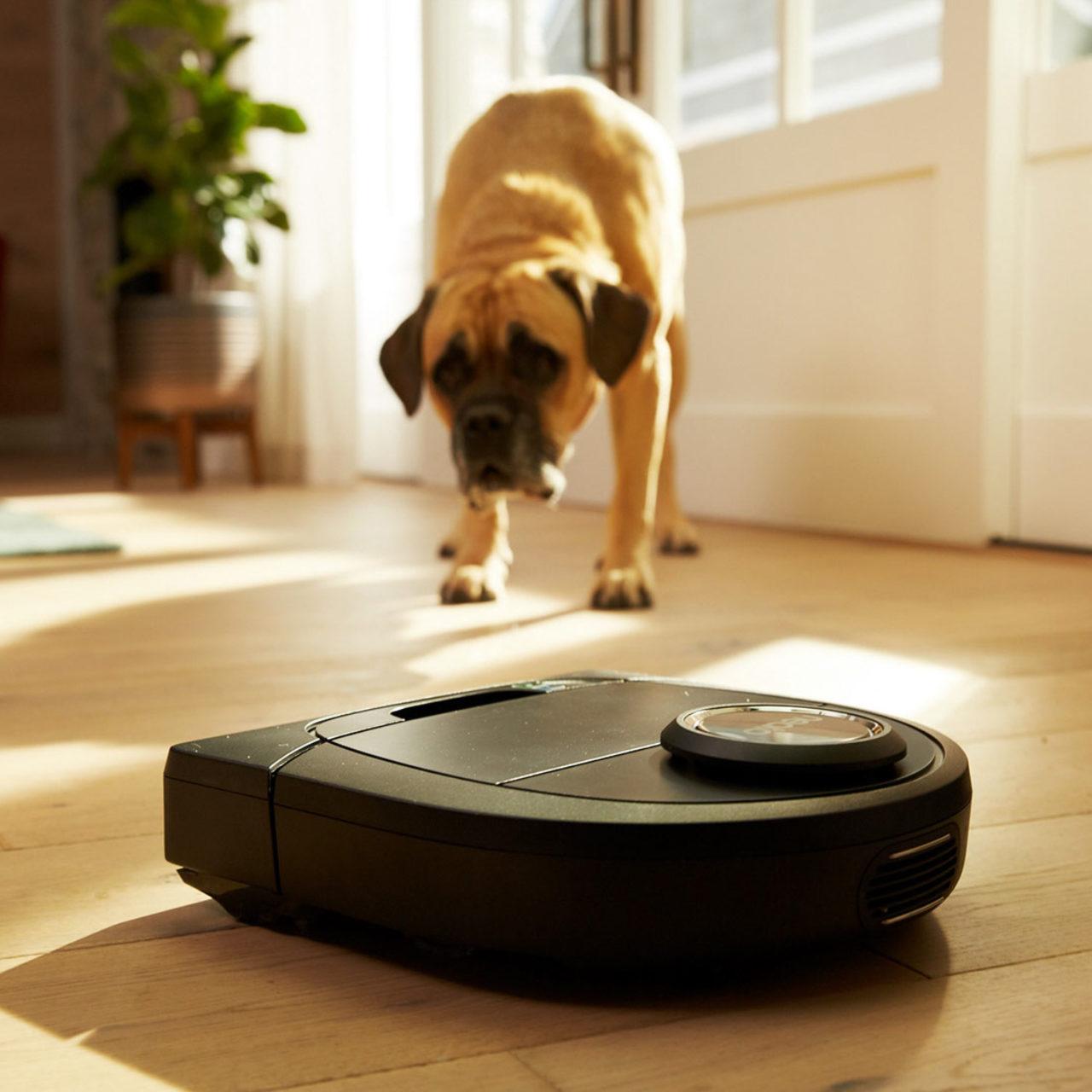 Aspirapolveri per animali: i migliori per i peli di cani e gatti