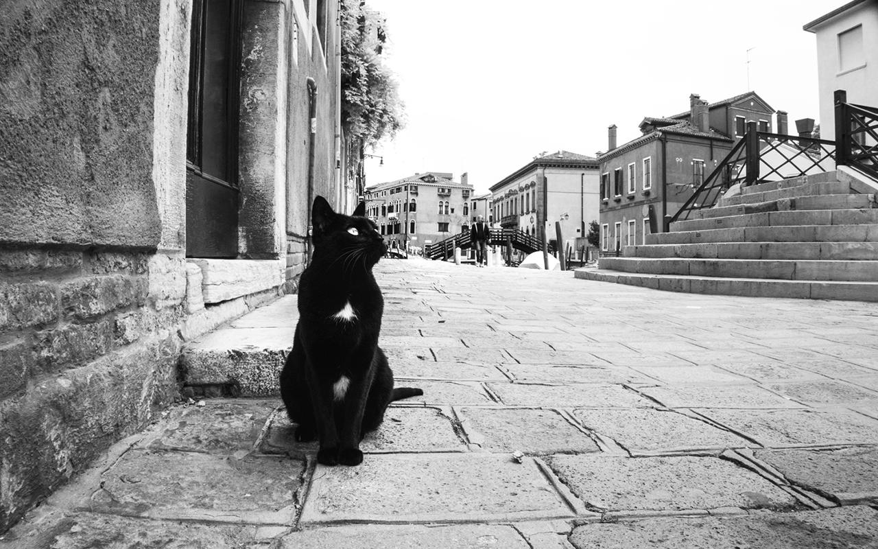 Fotografare il gatto: 5 consigli degli esperti