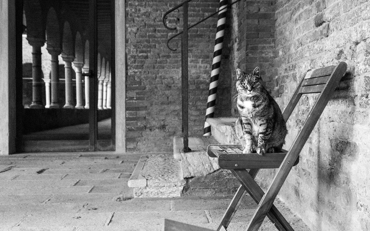 La fotografa dei gatti: Marianna Cat photographer