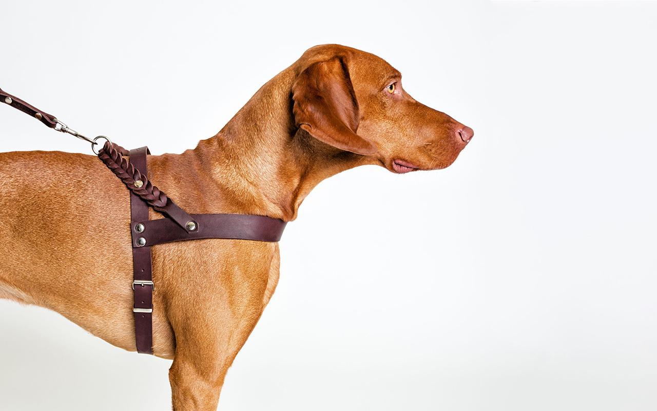 Pettorina per cani di design: come scegliere la migliore per il cane
