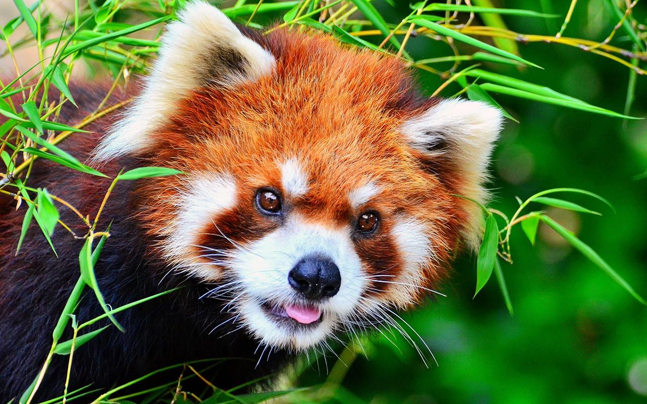 5 documentari di Netflix sugli animali che non potete perdervi
