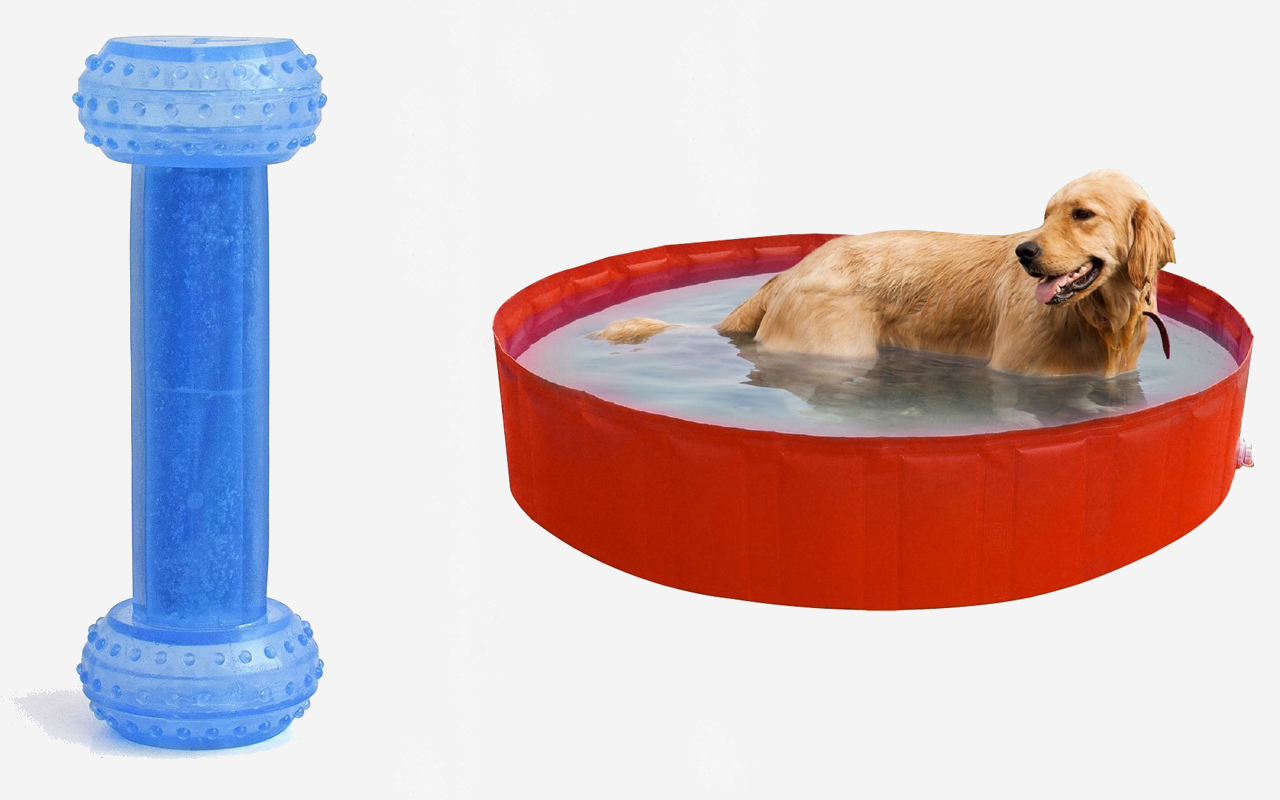 Giochi estivi per cani: divertirsi all'aria aperta