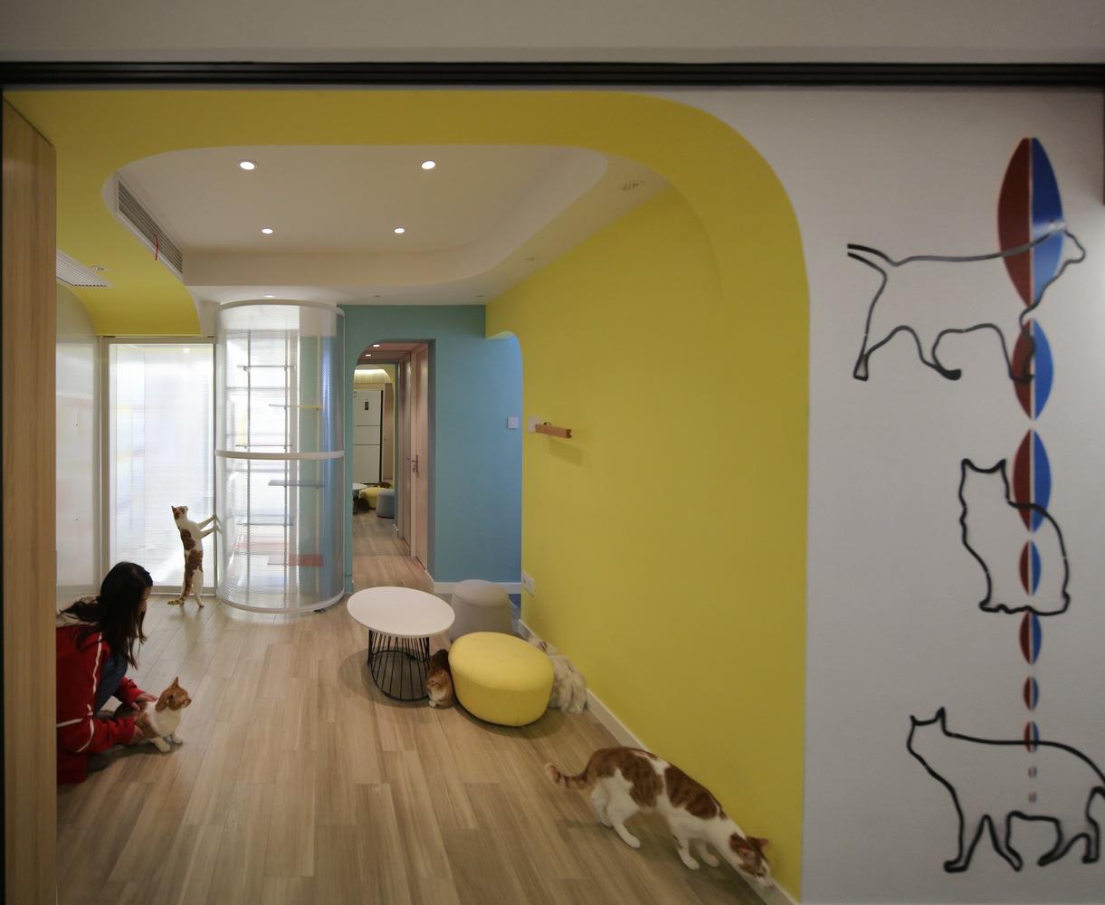 Una casa per animali: 1 umana, 40 gatti e 2 cani.