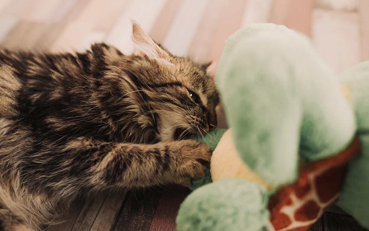 Consigli per vivere eco-friendly con cani e gatti
