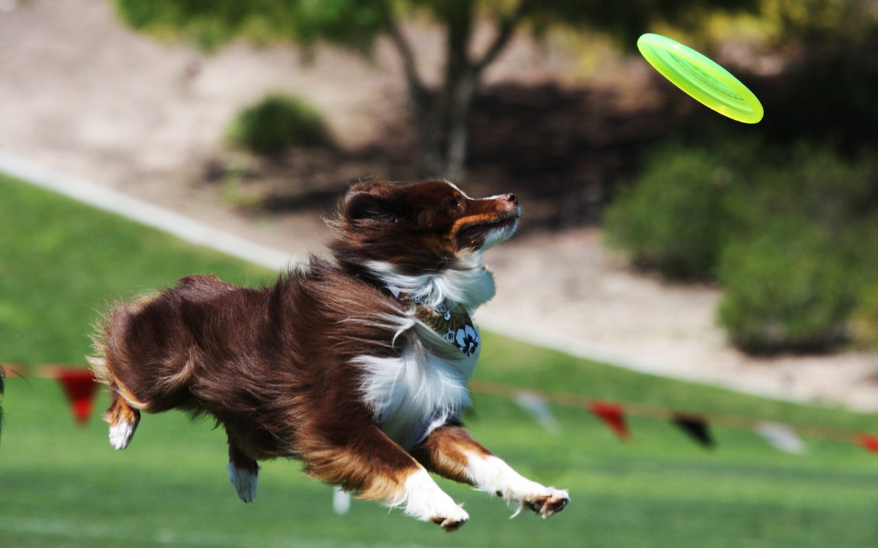 5 sport con il cane da provare!